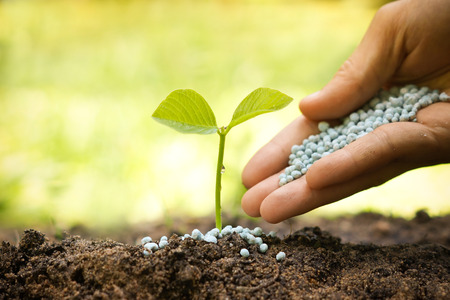 plant seed: hand giving chemical fertilizer to plants growing in sequence of seed germination on soil, evolution concept Stock Photo