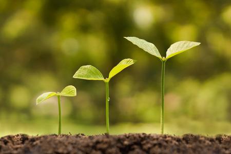crecimiento: árboles que crecen en un suelo fértil en la secuencia de la germinación Foto de archivo