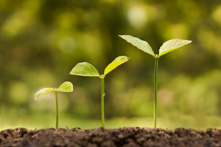 cultivate: trees growing on fertile soil in germination sequence