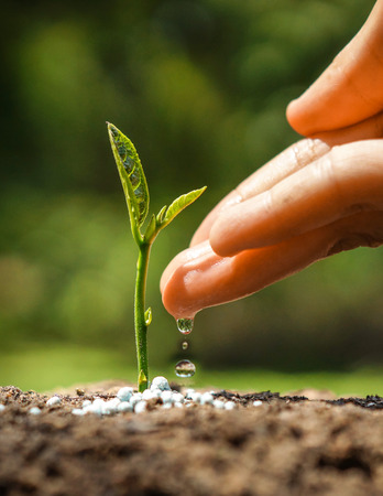 Hand watering a tree growing on fertile soil with green and yellow bokeh background / nurturing baby plant / protect nature Stockfoto