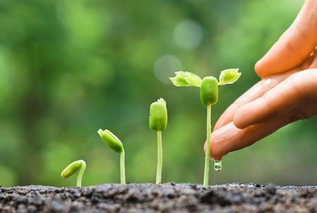 Agriculture. Plantes en croissance Semis de plantes Main nourrissant et arrosant les jeunes plants de plus en plus dans la séquence de germination sur un sol fertile avec fond vert naturel