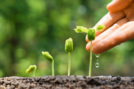 plant hand: Agriculture. Growing plants. Plant seedling. Hand nurturing and watering young baby plants growing in germination sequence on fertile soil with natural green background Stock Photo