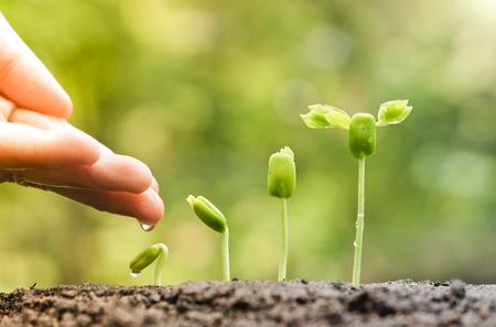 nourrir à la main et l'arrosage des jeunes plants de bébé en croissance dans la séquence de germination sur un sol fertile avec le fond vert naturel Banque d'images