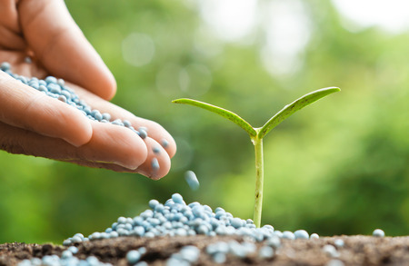 chemical fertilizer: hand giving chemical fertilizer to a young baby plant