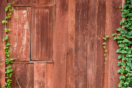 creeper: old wooden wall with green creeper plants