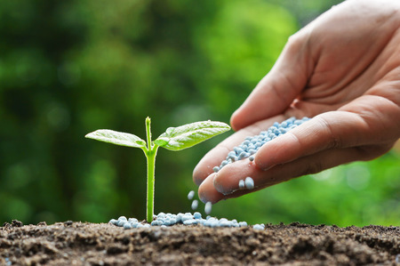 chemical fertilizer: hand of a farmer giving fertilizer to young green plants  nurturing baby plant with chemical fertilizer Reklamní fotografie