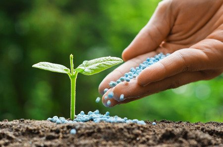 fertilizer: hand of a farmer giving fertilizer to young green plants  nurturing baby plant with chemical fertilizer Stock Photo