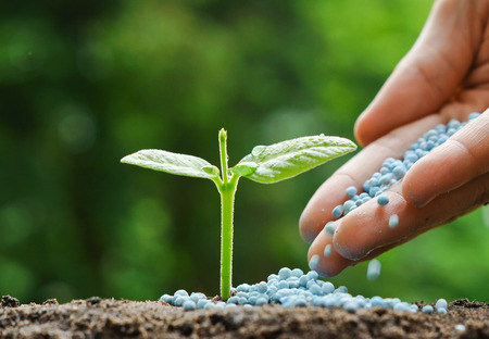 hand of a farmer giving fertilizer to young green plants  nurturing baby plant with chemical fertilizer Standard-Bild