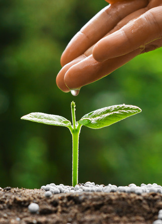 plant nature: hand nurturing and watering a young plant  Love and protect nature concept  nurturing baby plant