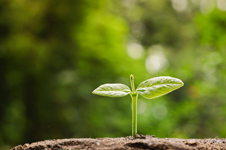 肥沃な土壌赤ちゃん植物に成長している苗木を開始新しい生活