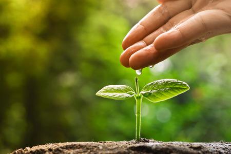 手の育成と愛の若い植物に水をまくと赤ちゃんの植物を育む自然概念を保護