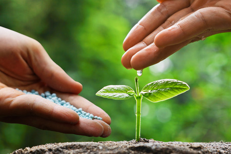 chemical fertilizer: hand of a farmer watering and giving fertilizer to young green plants  nurturing baby plant with chemical fertilizer