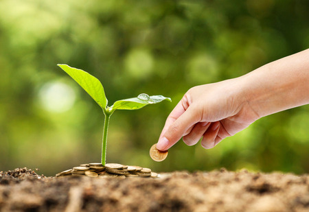 crecimiento planta: De negocios con la pr�ctica de la RSC de negocios con la preocupaci�n ambiental