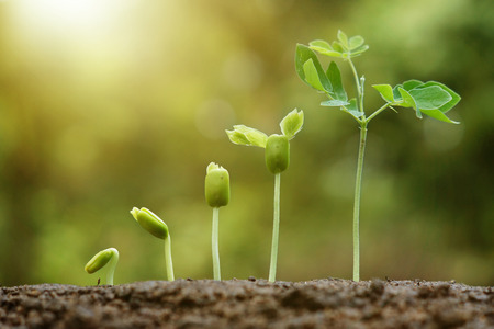 hand nurturing and watering young baby plants growing in germination sequence on fertile soil with natural green background Standard-Bild