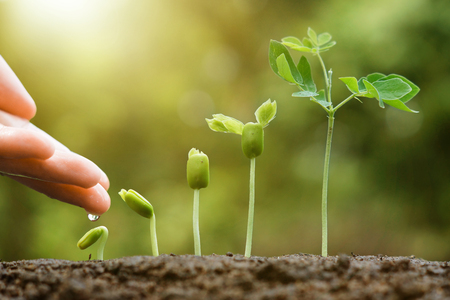plant growing: hand nurturing and watering young baby plants growing in germination sequence on fertile soil with natural green background Stock Photo