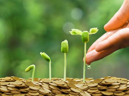 Mains arrosage des jeunes plants de bébé en croissance dans la séquence de germination sur des pièces d'or concept d'entreprise verte