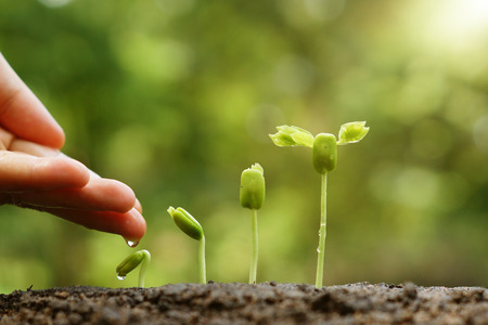 hand nurturing and watering young baby plants growing in germination sequence on fertile soil with natural green background Archivio Fotografico