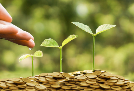 Hands watering young baby plants growing in germination sequence on golden coins  Green business concept