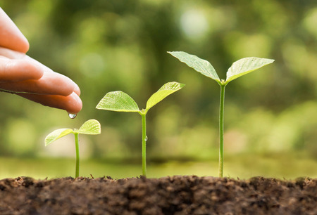 small plant: hand nurturing and watering young baby plants growing in germination sequence on fertile soil with natural green background Stock Photo