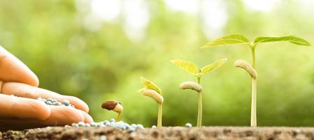 농업 - 화학 비료로 발아 순서로 자라는 어린 식물을 손으로 키운다. 스톡 콘텐츠