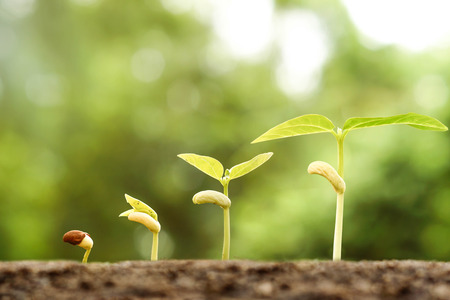 germinaci�n: Agricultura - Las plantas j�venes que crecen en secuencia de la germinaci�n