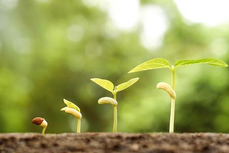 Landbouw - Jonge planten groeien in kieming opeenvolging