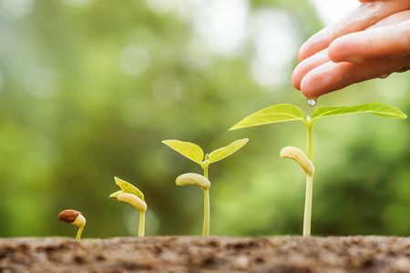 chemical fertilizer: Agriculture - Hand nurturing young plants growing in germination sequence with chemical fertilizer