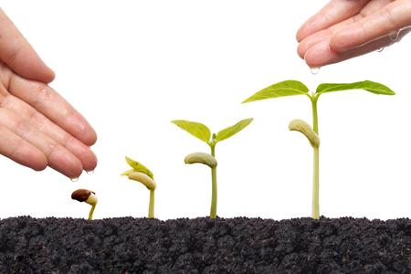 germinación: Agricultura - Mano nutrir las plantas jóvenes grow0ing en la secuencia de germinación