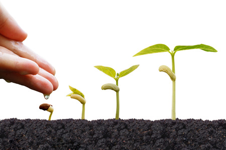 Agriculture - Hand nurturing young plants growing in germination sequence