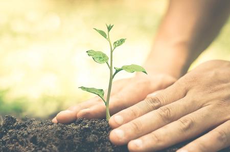 Mani in crescita e nutrimento albero che cresce sul terreno fertile con sfondo verde e giallo bokeh / nutrire pianta del bambino / protezione della natura Archivio Fotografico
