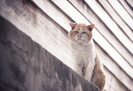 fittest: Local Tomcat. Old male cat with a big face on concrete wall