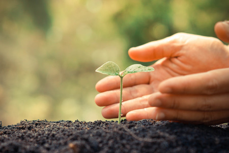 Hands growing and nurturing tree growing on fertile soil with green and yellow bokeh background  nurturing baby plant  protect nature