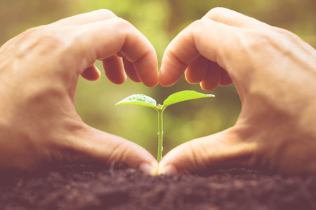 Love and protect nature. Nurturing young plant seedling. Growing tree. Agriculture. Reforestation. Save the world