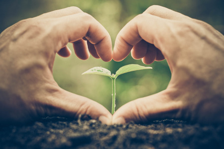 love tree: Love and protect nature. Nurturing young plant seedling. Growing tree. Agriculture. Reforestation. Save the world