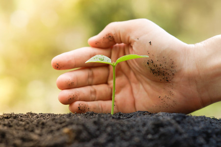 csr: Agriculture  Nurturing baby plant  protect nature  planting tree Stock Photo