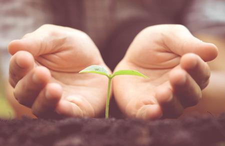 apoyo social: Agricultura. Manos crecimiento y consolidación de árbol que crece en el suelo fértil con el fondo del bokeh verde y amarillo  nutrir la planta del bebé  proteger la naturaleza