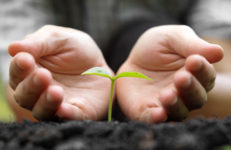 fertile: Agriculture. Hands growing and nurturing tree growing on fertile soil with green and yellow bokeh background  nurturing baby plant  protect nature Stock Photo