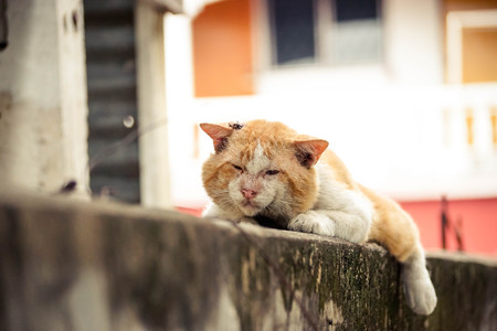 fittest: Old male cat with a big face on concrete wall  Big old tomcat