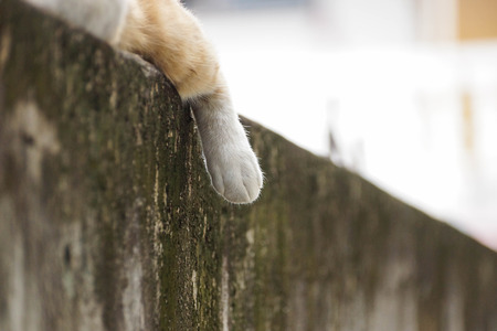 hormone  male: foot of a sleeping cat on concrete wall