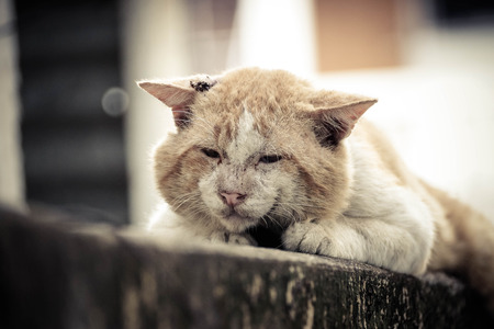 fittest: Old male cat with a big face on concrete wall