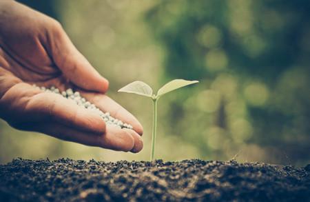 chemical fertilizer: hand giving chemical fertilizer to plant on fertile soil Stock Photo