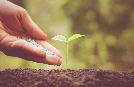 chemical fertilizer: hand giving chemical fertilizer to plant on soil  nurturing baby plant