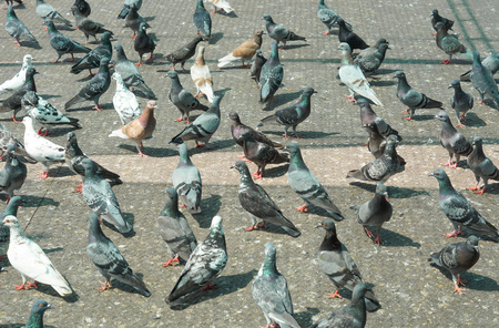 bad smell: pigeons on the floor causing excrement and bad smell problem