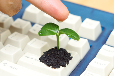 hand watering a tree growing on a computer keyboard  green it  green computing  csr  it ethics
