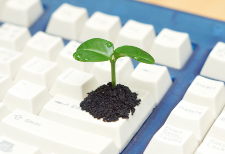 green computing: tree growing on a computer keyboard  green it  green computing  csr  it ethics Stock Photo