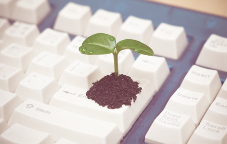 tree growing on a computer keyboard  green it  green computing  csr  it ethics Stock Photo