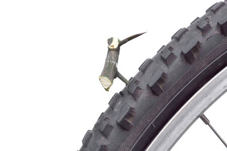 thorn bush: bicycle tyre puncture due to a thorn bush