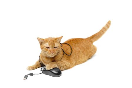 un chat jaune jouant avec une souris d'ordinateur