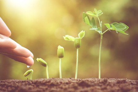Agriculture. Growing plants. Plant seedling. Hand nurturing and watering young baby plants growing in germination sequence on fertile soil with natural green background Archivio Fotografico