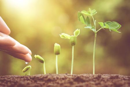 Landbouw. Groeiende planten. Installatiezaailing. Hand voeden en te drenken jonge baby planten groeien in ontkieming volgorde op vruchtbare bodem met natuurlijke groene achtergrond